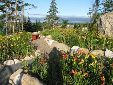 Daylilies with a view