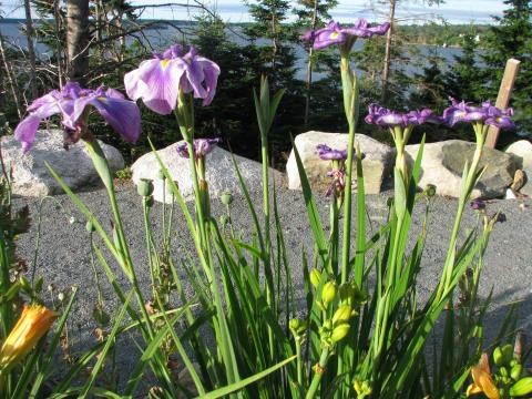 Iris above the harbour