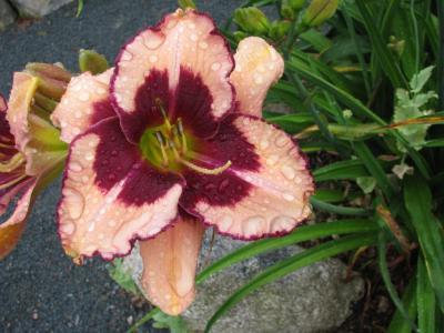 Bloom Hilda