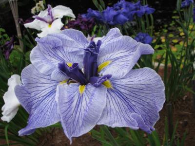 Blue Spritz