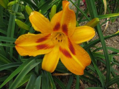 Saratoga Springtime