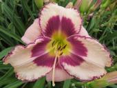 Midsummer Blooming Bouquet