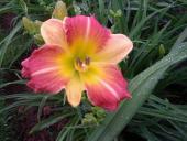 Prairie Blossoms